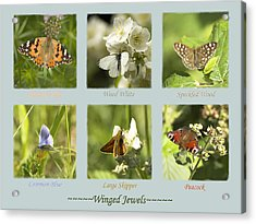 Winged Jewels Acrylic Print by Hazy Apple