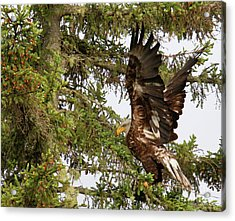 Acrylic Print featuring the photograph Winging-it Up The Tree 1 by Debbie Stahre