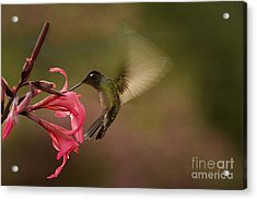 Acrylic Print featuring the photograph Wings In Motion 3 by Anne Rodkin