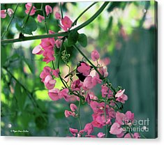 Acrylic Print featuring the photograph Wings by Megan Dirsa-DuBois