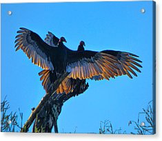 Wings Of Gold Acrylic Print by Kimo Fernandez