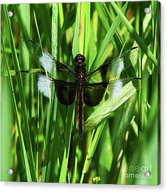 Acrylic Print featuring the photograph Wings Of Note by Deborah Johnson