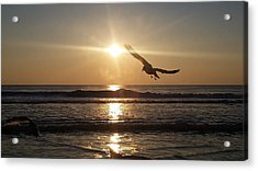 Wings Of Sunrise Acrylic Print