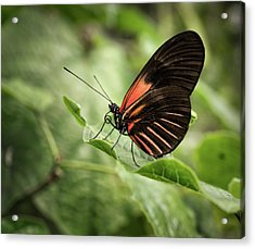 Wings Of The Tropics Butterfly Acrylic Print