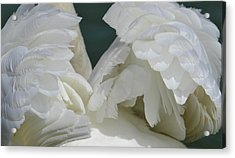 Wings Of White Acrylic Print