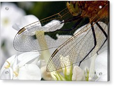 Wings On A Dragon Acrylic Print by Steve Augustin
