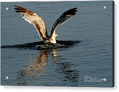 Acrylic Print featuring the photograph Wings On The Sea by Paul SEQUENCE Ferguson             sequence dot net