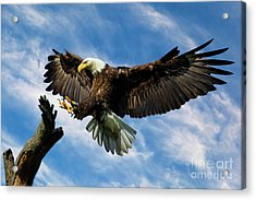 Wings Outstretched Acrylic Print