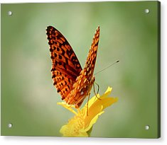 Wings Up - Butterfly Acrylic Print by MTBobbins Photography