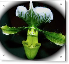 Acrylic Print featuring the photograph Wingspan Orchid by Randy Rosenberger