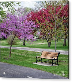 Acrylic Print featuring the photograph Winona Mn Bench With Flowering Tree By Yearous by Kari Yearous