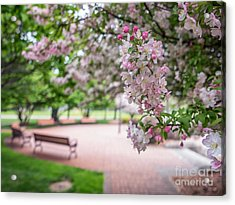 Winona Veterans Memorial With Blossoms Acrylic Print