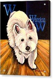 Winston Acrylic Print by Carol Allen Anfinsen