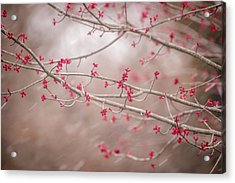 Acrylic Print featuring the photograph Winter And Spring by Terry DeLuco