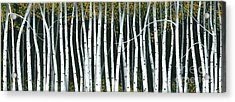 Acrylic Print featuring the painting Winter Aspen 3 by Michael Swanson