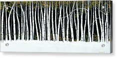 Acrylic Print featuring the painting Winter Aspens II by Michael Swanson