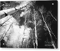 Acrylic Print featuring the photograph Winter Aspens by The Forests Edge Photography - Diane Sandoval