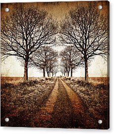 Winter Avenue Acrylic Print by Meirion Matthias