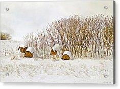 Winter Beauty Acrylic Print by Deborah Benoit