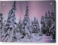 Winter Beauty Acrylic Print