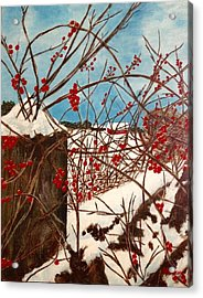 Winter Berries Acrylic Print