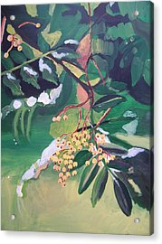 Winter Berry Acrylic Print by Krista Ouellette