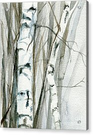 Winter Birch Acrylic Print by Laurie Rohner