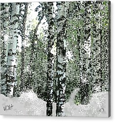 Winter Birches Acrylic Print by Walter Chamberlain
