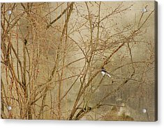 Winter Bird At The Audubon Acrylic Print