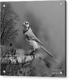Winter Bird Acrylic Print by Jan Piller