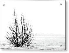 Winter Bones Acrylic Print