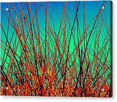 Winter Branches Acrylic Print