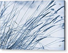 Winter Breeze Acrylic Print by Priska Wettstein