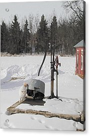 Winter Cat At The Pump Acrylic Print by Laurie With