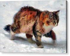 Winter Cat Acrylic Print