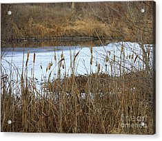 Winter Cattails  Acrylic Print by Carol Groenen