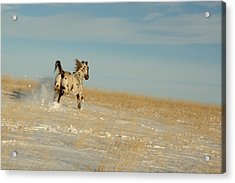 Winter Charger Acrylic Print
