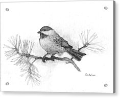 Winter Chickadee Acrylic Print by Cynthia  Lanka