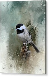 Winter Chickadee Acrylic Print by Jai Johnson