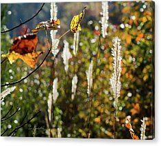 Winter Color Acrylic Print by George Randy Bass
