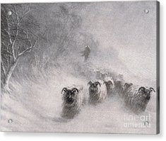 Winter Comes With A Stormy Blast Acrylic Print by Joseph Farquharson