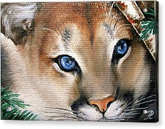 Winter Cougar Acrylic Print by Larissa Prince