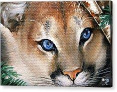 Winter Cougar Acrylic Print by Larissa Prince