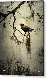 Winter Crow Acrylic Print