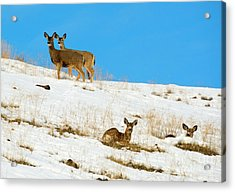 Winter Deer Acrylic Print by Mike Dawson
