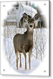 Winter Deer On The Tree Farm Acrylic Print