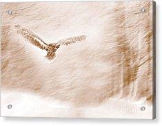 Winter Feathers Acrylic Print