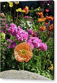 Winter Flowers Acrylic Print by Gwyn Newcombe