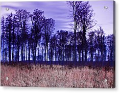 Acrylic Print featuring the photograph Winter Forest At Sunset In Hungary by Gabor Pozsgai
