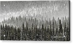 Winter Forest Acrylic Print by Brad Allen Fine Art